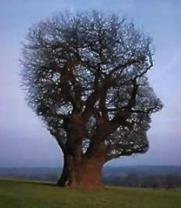réflexions sur le comportementalisme: l'arbre cerveau